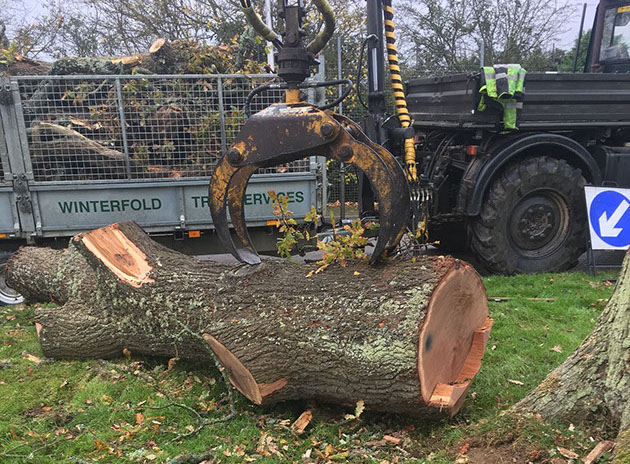 photo of tree being cut1